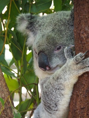 Australien Braender Kirstine Kaern